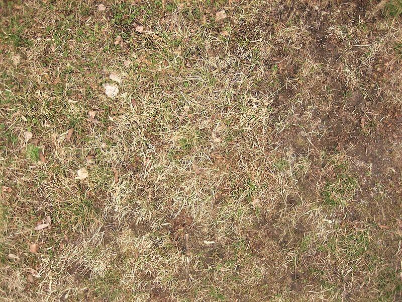 Short dry grass
